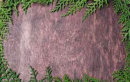 Natural frame from spruce branches on wood background Stock Photography