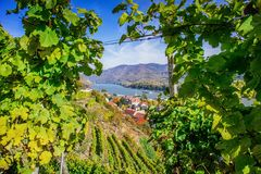 Natural frame in a Vineyard Stock Photo