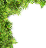 Natural Framework with Fir Twigs Royalty Free Stock Image