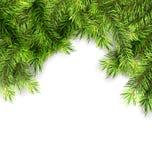 Natural Framework with Fir Twigs Royalty Free Stock Photos
