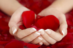 Natural French Manicure Hands Holding Red Rose Petals Royalty Free Stock Photo