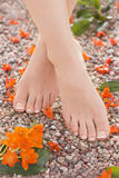 Natural French Pedicure Orange Star Flowers in Nature Stock Images