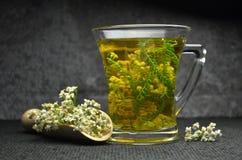Achillea milfoil tea. Natural fresh achillea milfoil tea stock photography