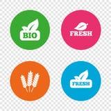 Natural fresh Bio food icons. Stock Photography