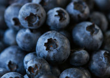 Natural fresh blueberries close up . Stock Image