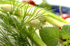 Natural fresh herbs Stock Images