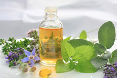 Natural fresh herbs Stock Image