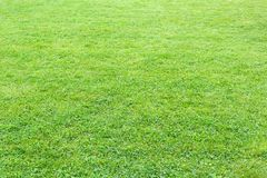 Natural, fresh, manicured lawn of green grass after rain. The background image texture Royalty Free Stock Photo