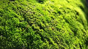 Natural fresh moss Stock Photography