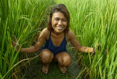 Natural and fresh portrait of young happy and exotic islander Asian girl from Indonesia smiling cheerful and excited posing in. Green field playing with rice royalty free stock photo