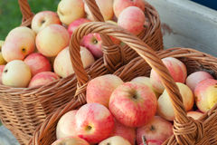 Natural fresh red and yellow apples in baskets Stock Images