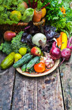 Natural fresh vegetables straight from the garden Royalty Free Stock Photo