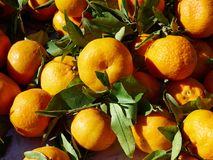 Natural freshly picked Mandarines Tangerine Clementine Avocado f Royalty Free Stock Photos