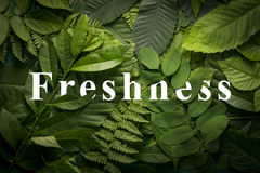 Natural freshness concept of wild green jungle foliage. Top view of creative layout made out of wild forest leaves. Flat lay foliage. natural freshness concept Royalty Free Stock Image