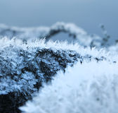 Natural frost snow ice crystals Stock Photography