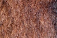 Natural fur closeup Stock Photography
