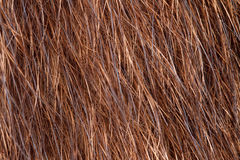 Natural fur closeup Royalty Free Stock Image