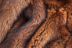 Natural fur closeup Stock Images