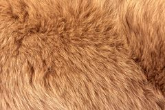 Natural fur of red polar fox closeup. May be used as background or texture royalty free stock photos