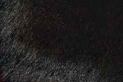 Natural fur texture background in hight resolution Royalty Free Stock Photo