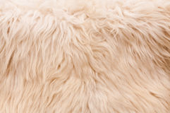 Natural furry background Royalty Free Stock Images
