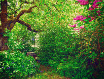 Natural garden with lilac flowers Royalty Free Stock Photo