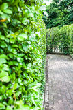 Natural. Garden walkway is green in Thailand Royalty Free Stock Photo