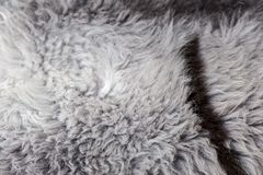 Rare breed sheepskin rugs fleece details view from top. Natural, genuine, rare breed sheepskin rugs fleece details view from top. Grey texture shows different Royalty Free Stock Photo