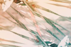 Natural geometrical decor art palm Pattern Toned royalty free stock images