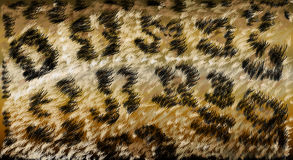 Natural Gepard cheetah skin wool background. Vector illustration Royalty Free Stock Photos