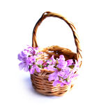 Natural_gift_01. A small gift made from simple natural elements, some flowers and willow hay basket Stock Image