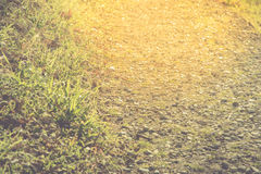 Natural gold walkway with rock and grass, selective focus, Nature concept Stock Photography