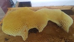 Natural Golden honeycomb bee grown by bees royalty free stock photography