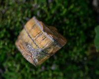 Natural Golden Tiger Eye chunk on green moss in the forest. Preserve stock photography
