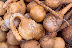 Natural gourds Royalty Free Stock Photos