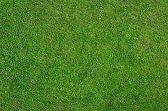 Natural grass Royalty Free Stock Photos