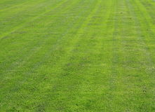 Natural grass. On a football field for background Royalty Free Stock Photos
