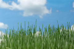 Natural grass against the sky Royalty Free Stock Images