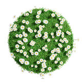 Natural grass arena with flowers Stock Image