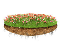 Natural grass arena  on white background Royalty Free Stock Image