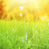 Natural grass background. Royalty Free Stock Photo