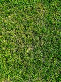 Natural grass background royalty free stock photos