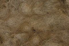 Natural grass background texture Royalty Free Stock Photo