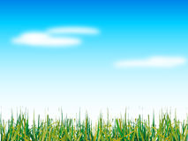 Natural grass and blue sky. With clouds Stock Photo
