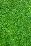 Natural grass field stock images