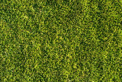 Natural grass texture Stock Images