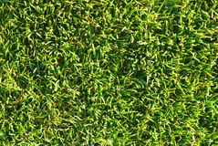 Natural grass texture Stock Photography