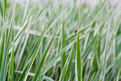 The natural grass texture Royalty Free Stock Image