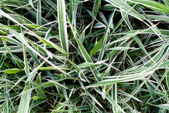 The natural grass texture Royalty Free Stock Photos