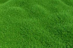 Natural grass texture pattern background. Top view grassy lawn for environmental backdrop. 3d rendering. Natural grass texture pattern background. Top view Royalty Free Stock Image